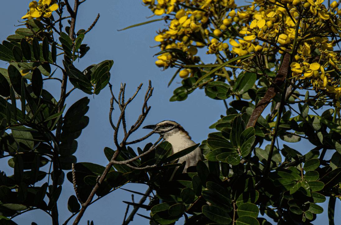 Abejas y Árboles Encontrarán Abrigo en Esta Ciudad de Costa Rica